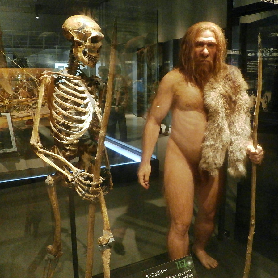 900px-Skeleton_and_restoration_model_of_Neanderthal_La_Ferrassie_1