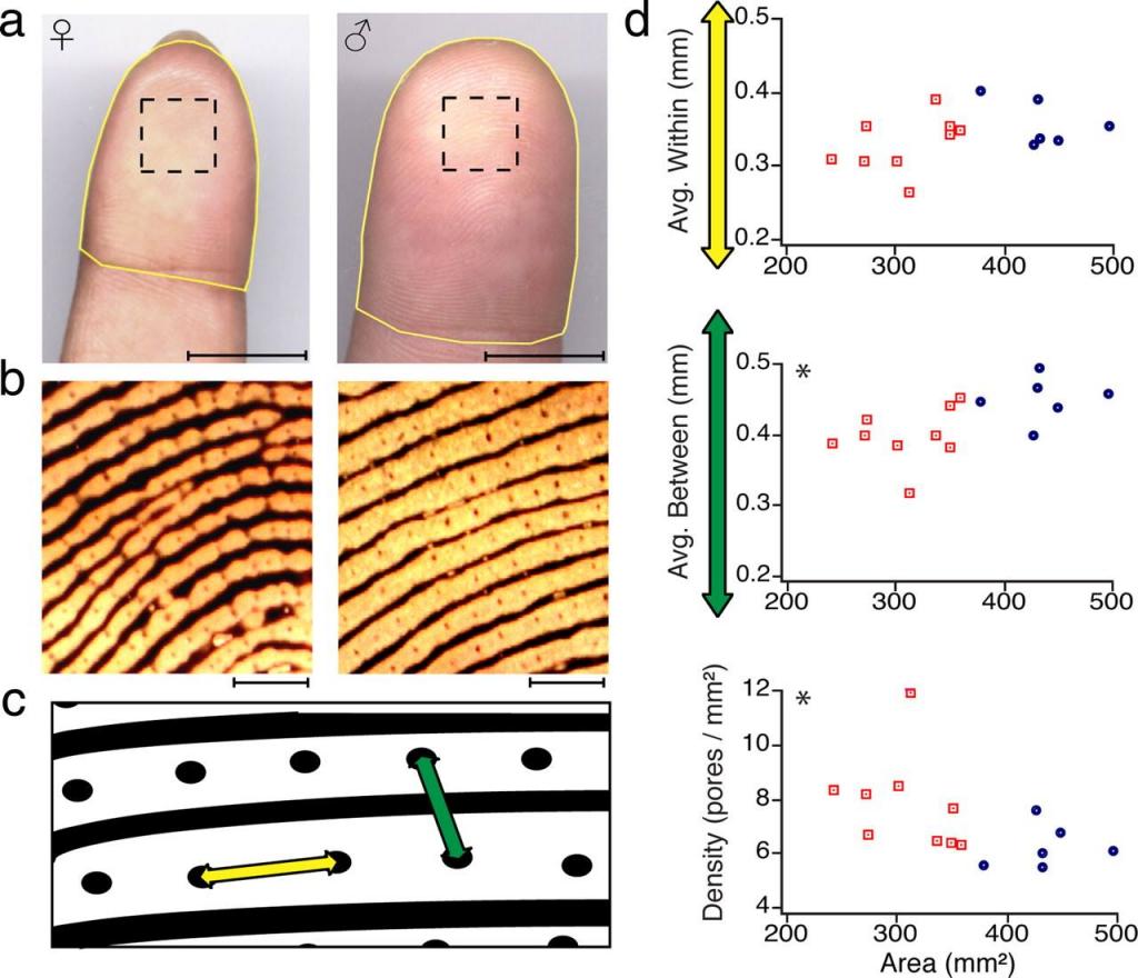 fingerprint-acuity